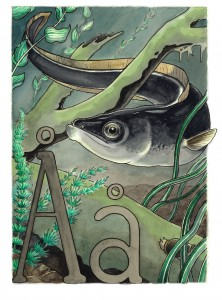 Å som i ål