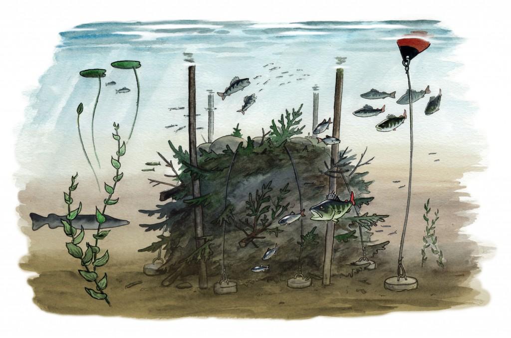 Faktablad om risvasar, Naturskyddsföreningen Viva Vatten